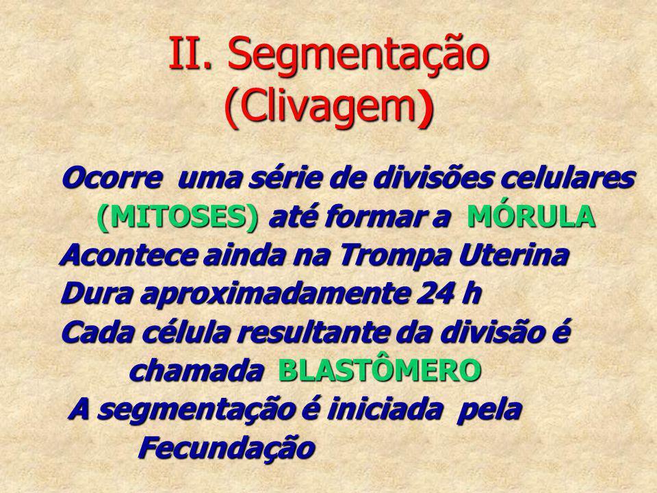 II. Segmentação (Clivagem)
