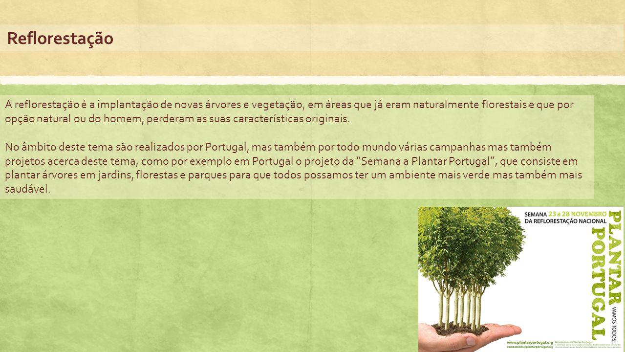 Reflorestação