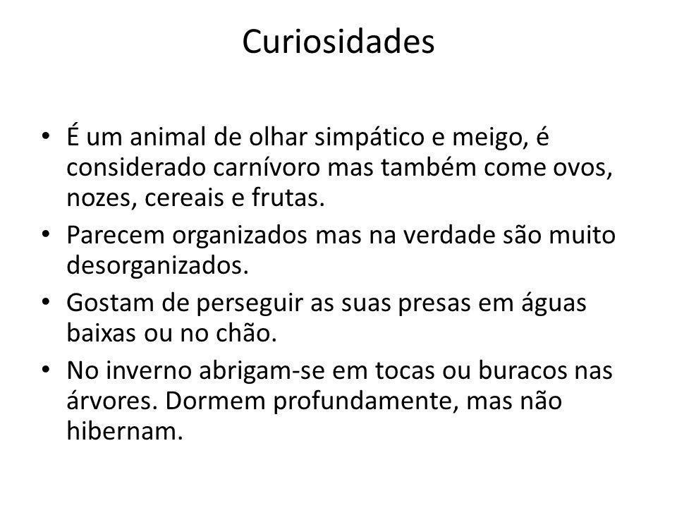 Curiosidades É um animal de olhar simpático e meigo, é considerado carnívoro mas também come ovos, nozes, cereais e frutas.