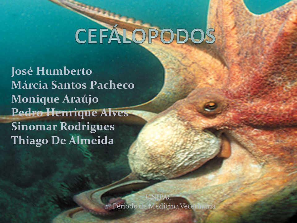 CEFÁLOPODOS José Humberto Márcia Santos Pacheco Monique Araújo