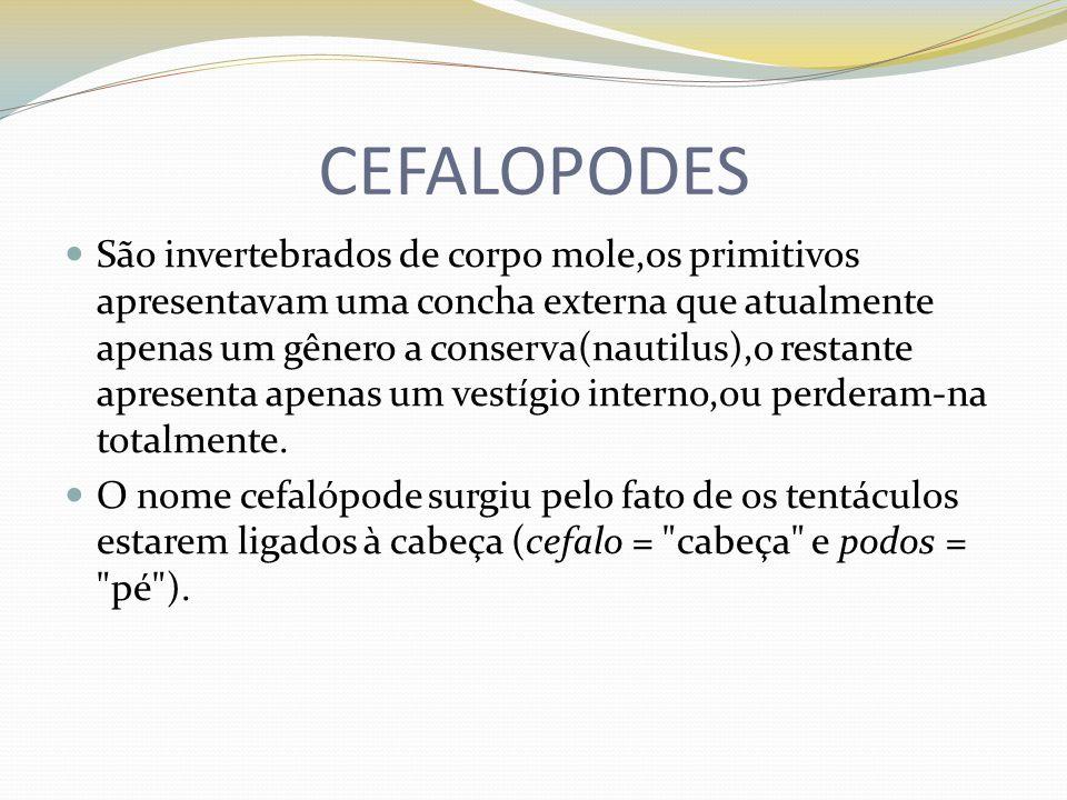 CEFALOPODES