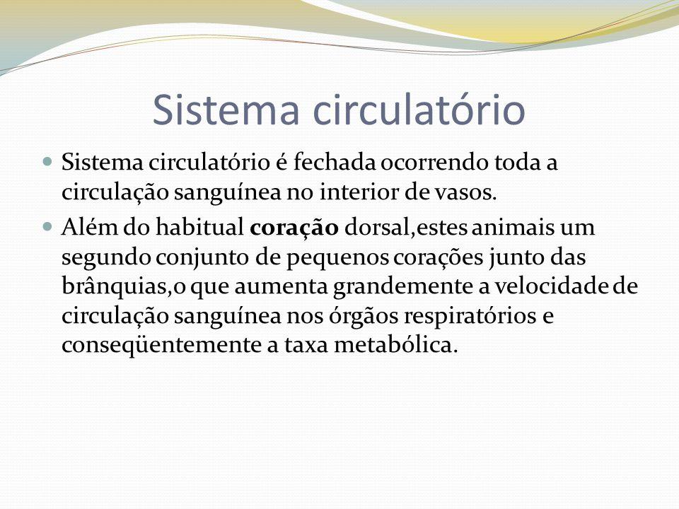 Sistema circulatório Sistema circulatório é fechada ocorrendo toda a circulação sanguínea no interior de vasos.