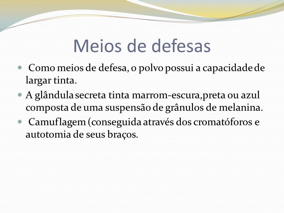 Meios de defesas Como meios de defesa, o polvo possui a capacidade de largar tinta.
