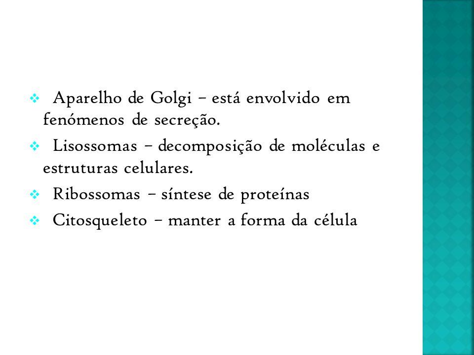 Aparelho de Golgi – está envolvido em fenómenos de secreção.