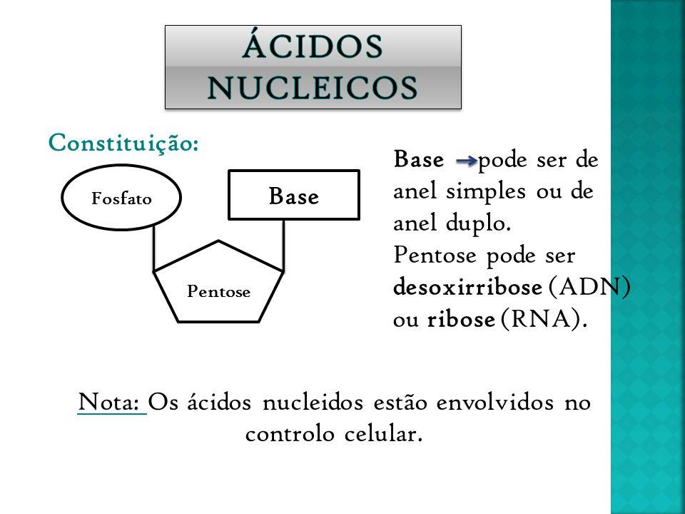 Nota: Os ácidos nucleidos estão envolvidos no controlo celular.