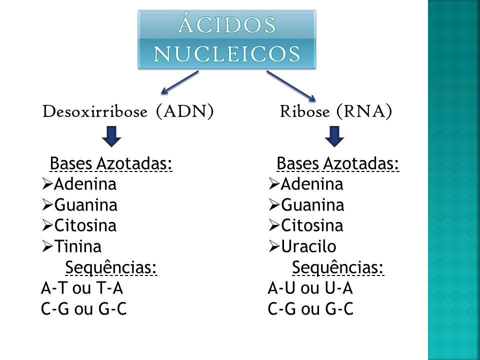 Ácidos Nucleicos Desoxirribose (ADN) Ribose (RNA) Bases Azotadas: