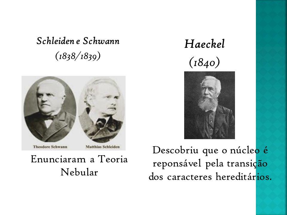 Schleiden e Schwann (1838/1839)