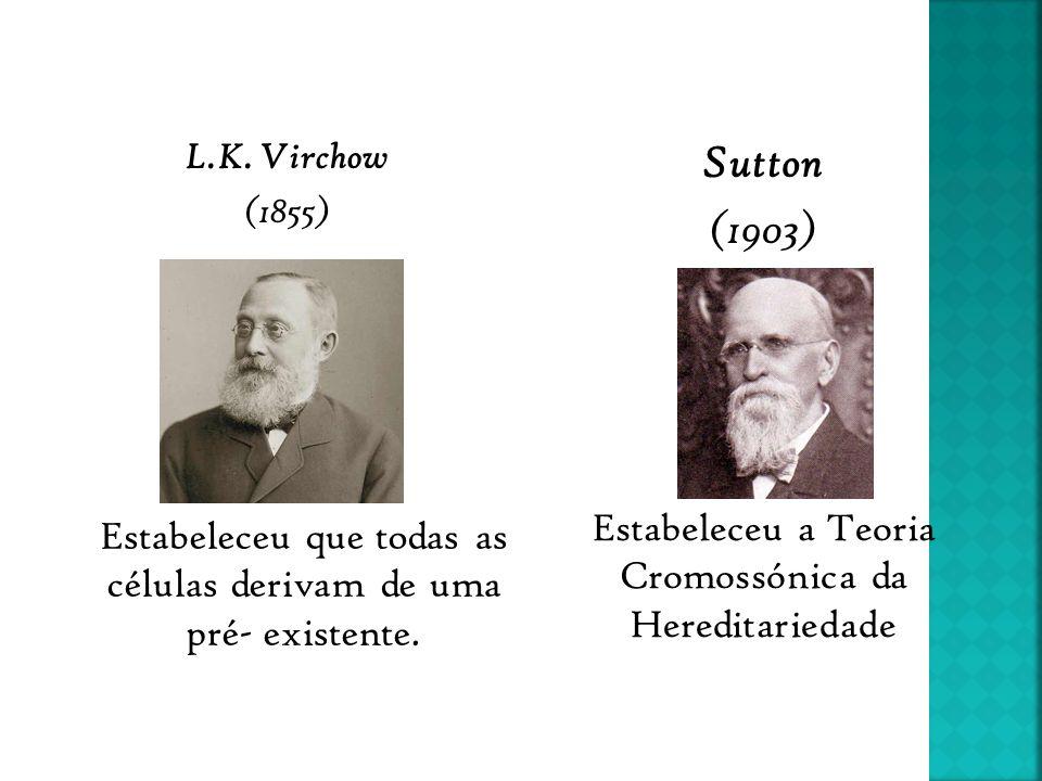 Sutton (1903) Estabeleceu a Teoria Cromossónica da Hereditariedade