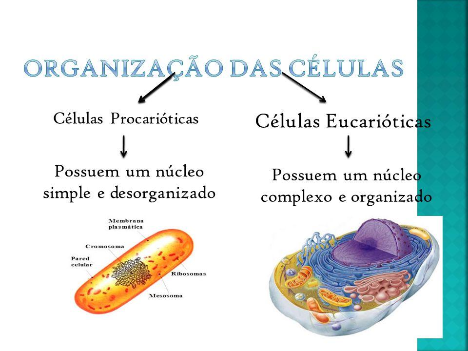 Organização das células