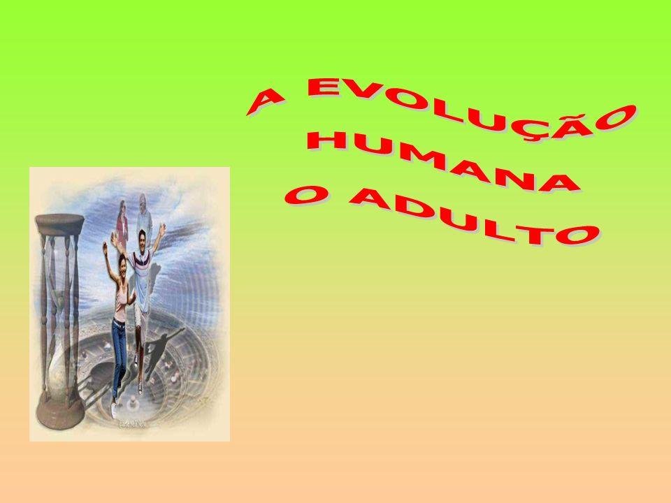 A EVOLUÇÃO HUMANA O ADULTO