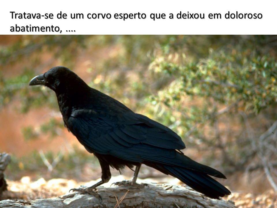 Tratava-se de um corvo esperto que a deixou em doloroso abatimento, ....