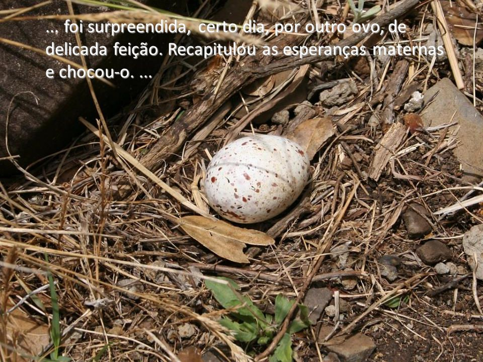 foi surpreendida, certo dia, por outro ovo, de delicada feição