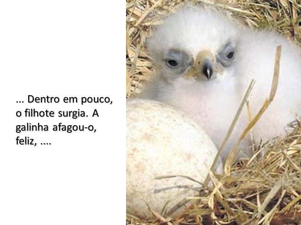 ... Dentro em pouco, o filhote surgia. A galinha afagou-o, feliz, ....
