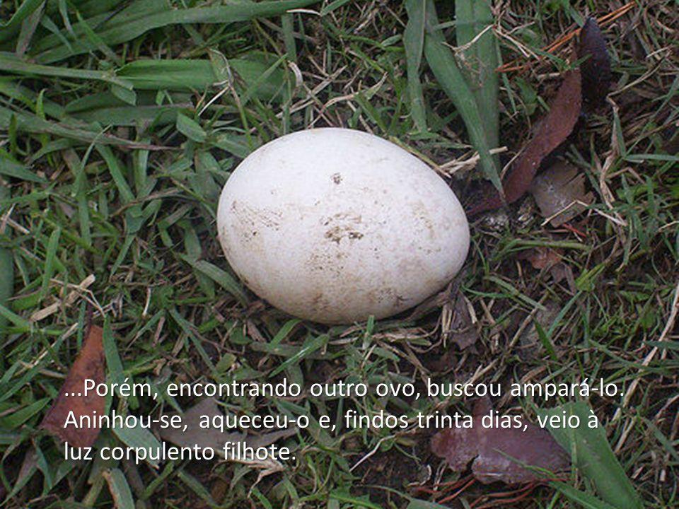 Porém, encontrando outro ovo, buscou ampará-lo