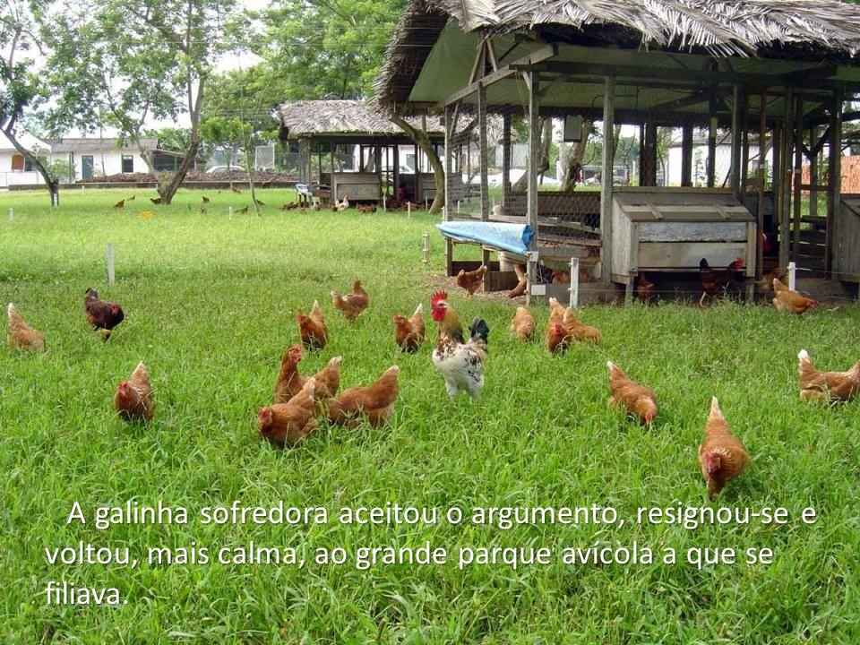 A galinha sofredora aceitou o argumento, resignou-se e voltou, mais calma, ao grande parque avícola a que se filiava.