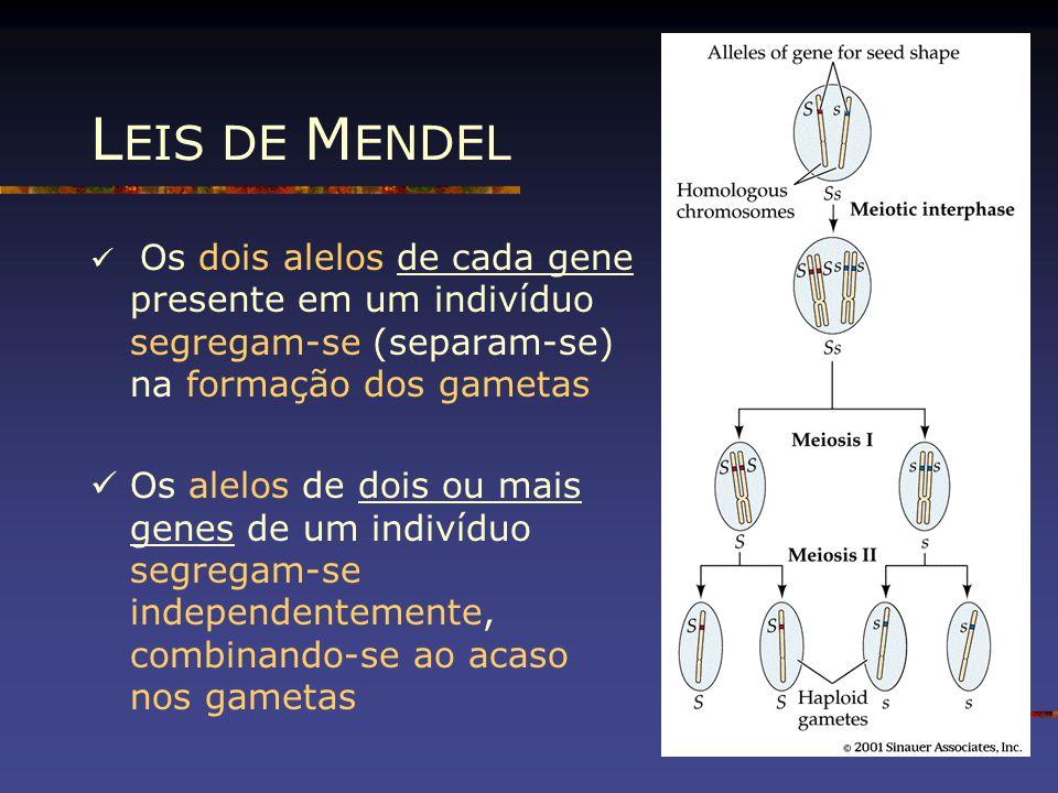 LEIS DE MENDEL Os dois alelos de cada gene presente em um indivíduo segregam-se (separam-se) na formação dos gametas.