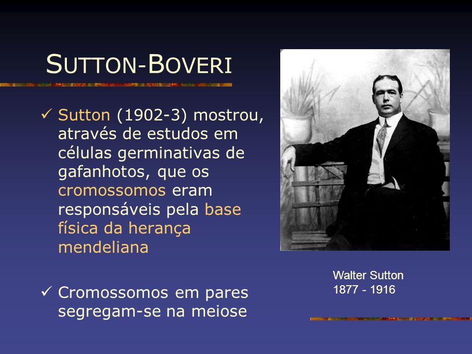 SUTTON-BOVERI