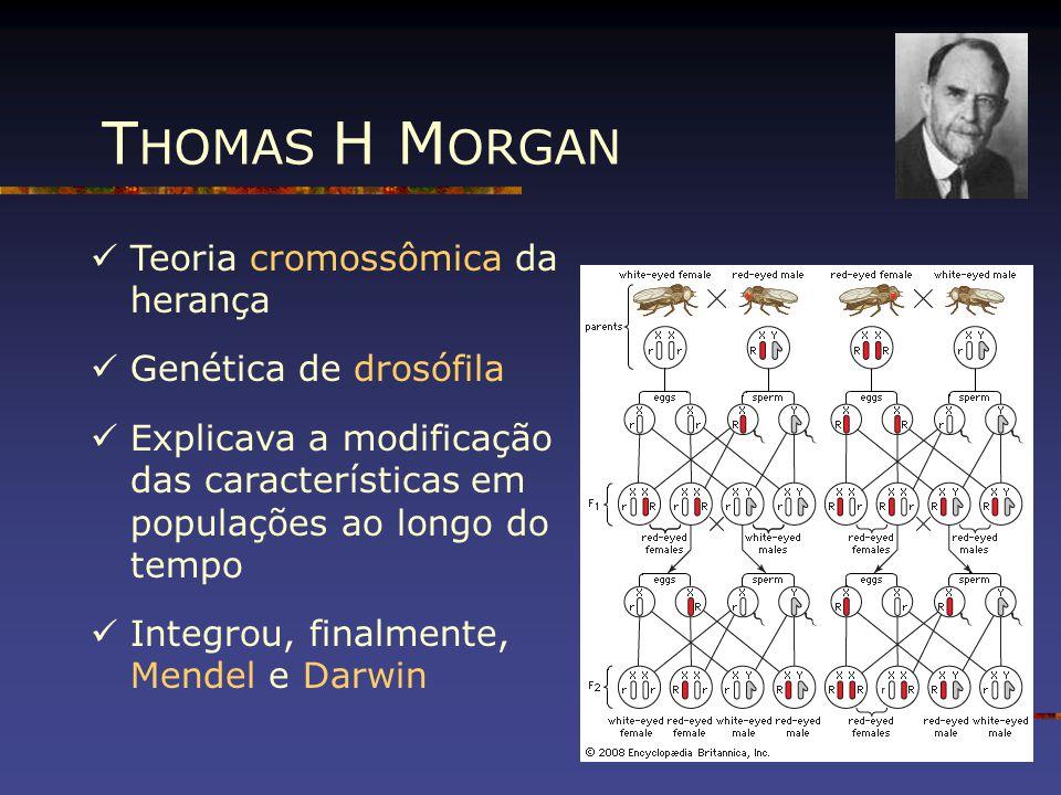 THOMAS H MORGAN Teoria cromossômica da herança Genética de drosófila