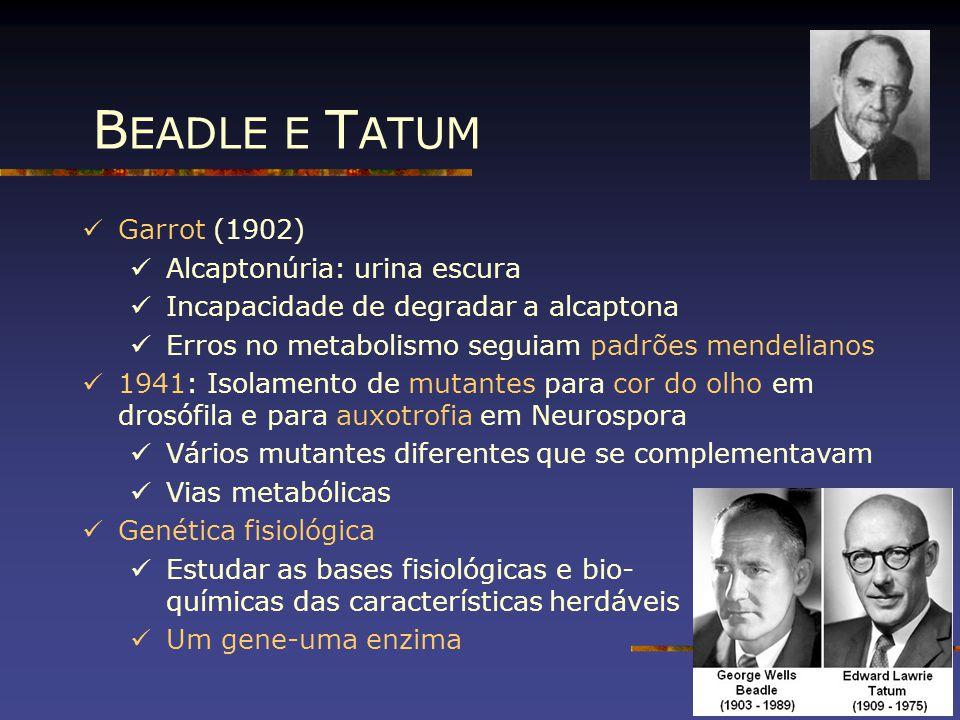 BEADLE E TATUM Garrot (1902) Alcaptonúria: urina escura