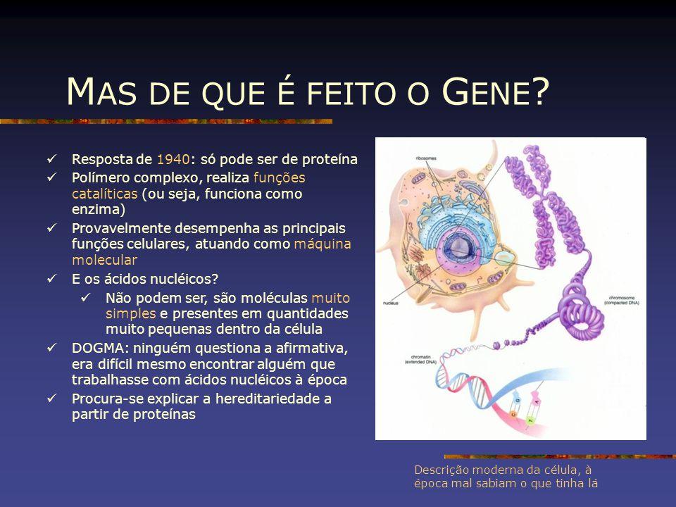 MAS DE QUE É FEITO O GENE Resposta de 1940: só pode ser de proteína