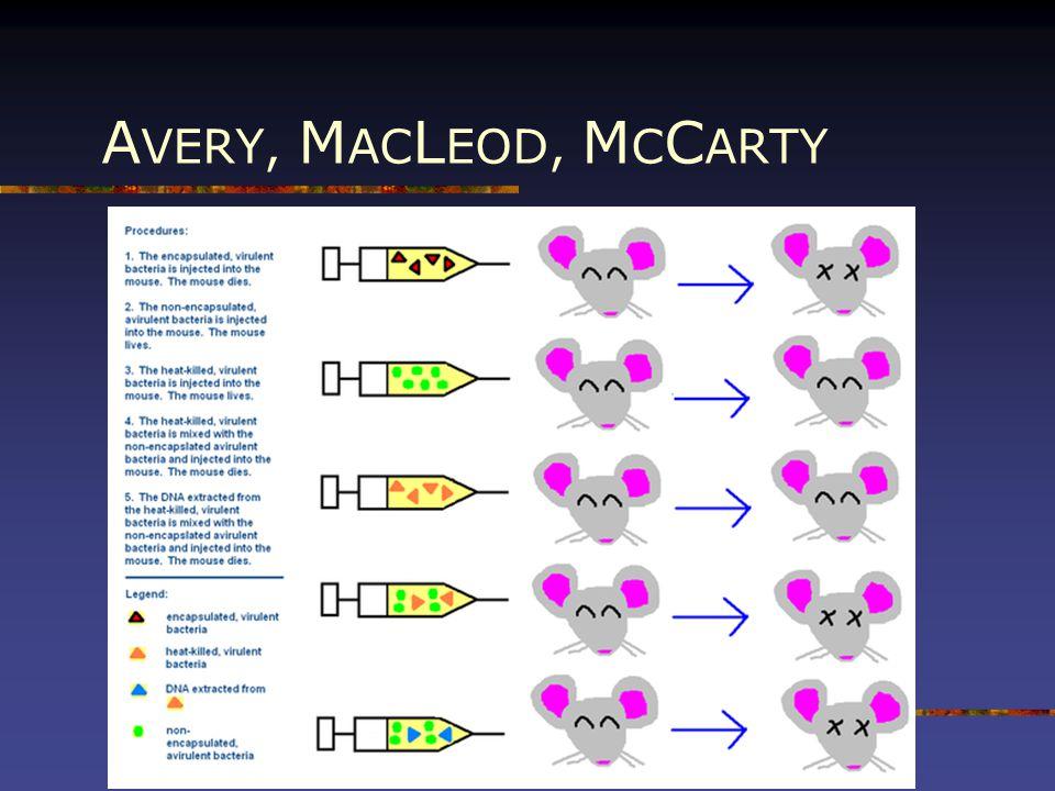 AVERY, MACLEOD, MCCARTY
