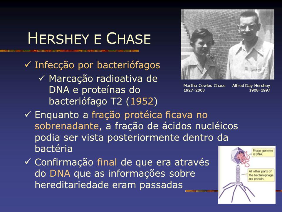 HERSHEY E CHASE Infecção por bacteriófagos