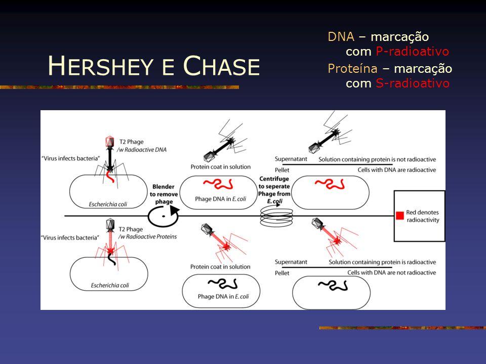 HERSHEY E CHASE DNA – marcação com P-radioativo