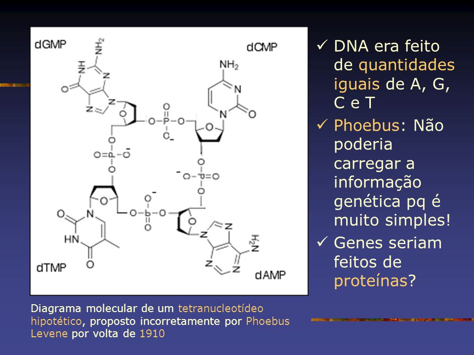 DNA era feito de quantidades iguais de A, G, C e T