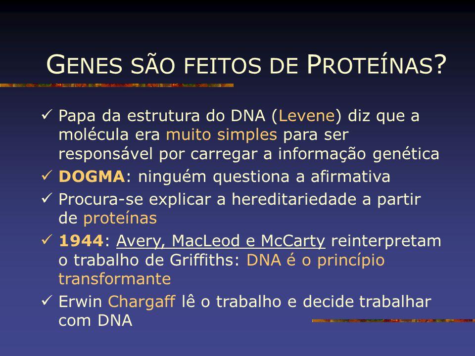 GENES SÃO FEITOS DE PROTEÍNAS