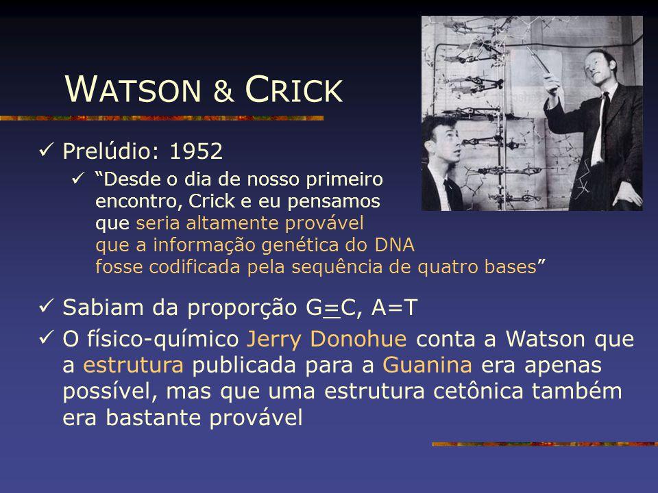 WATSON & CRICK Prelúdio: 1952 Sabiam da proporção G=C, A=T
