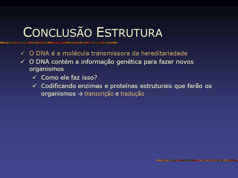 CONCLUSÃO ESTRUTURA O DNA é a molécula transmissora da hereditariedade