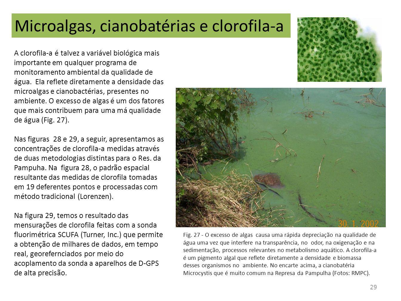 Microalgas, cianobatérias e clorofila-a