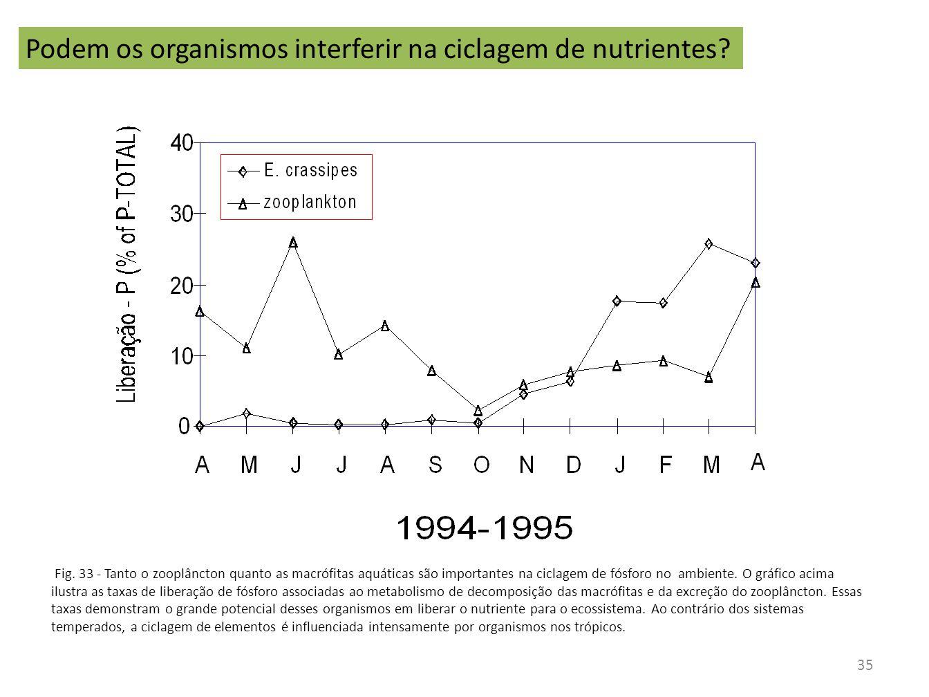 Podem os organismos interferir na ciclagem de nutrientes