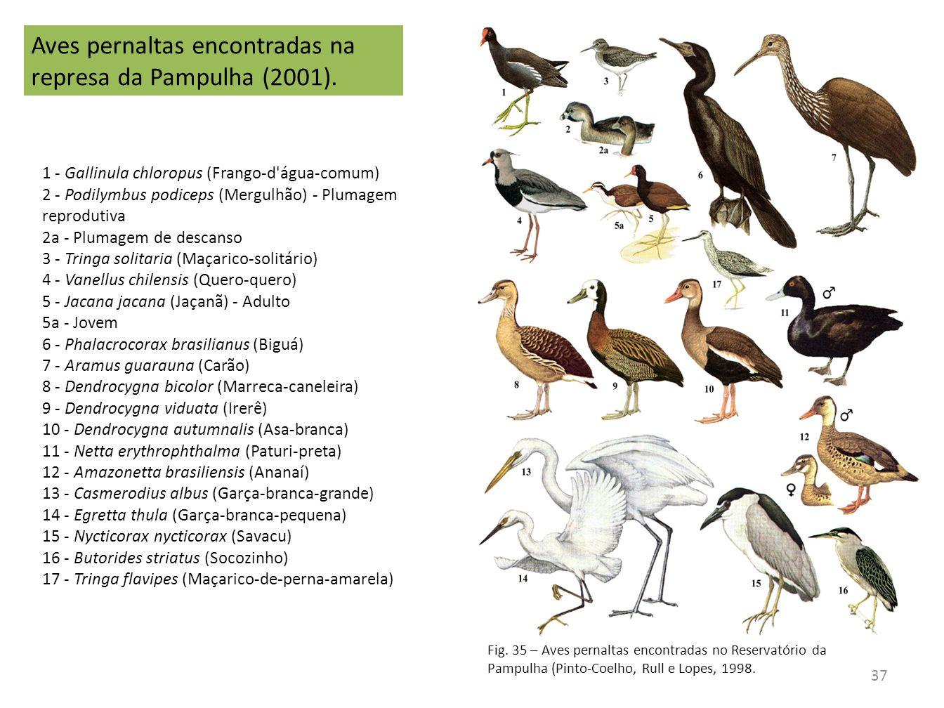 Aves pernaltas encontradas na represa da Pampulha (2001).