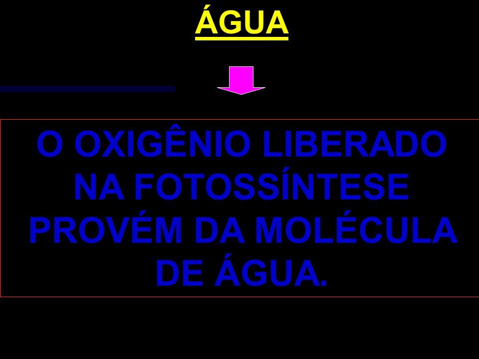 O OXIGÊNIO LIBERADO NA FOTOSSÍNTESE PROVÉM DA MOLÉCULA DE ÁGUA.