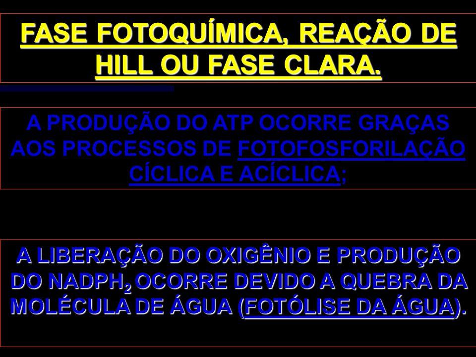 FASE FOTOQUÍMICA, REAÇÃO DE HILL OU FASE CLARA.