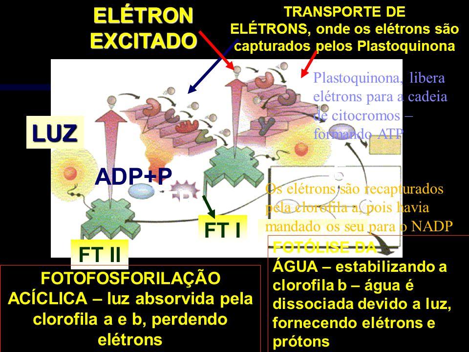LUZ ADP+P ATP ELÉTRON EXCITADO E H+ FT I FT II OXIGÊNIO