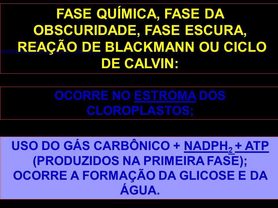OBSCURIDADE, FASE ESCURA, REAÇÃO DE BLACKMANN OU CICLO DE CALVIN: