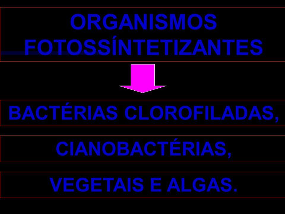 BACTÉRIAS CLOROFILADAS,