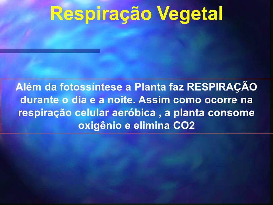 Respiração Vegetal