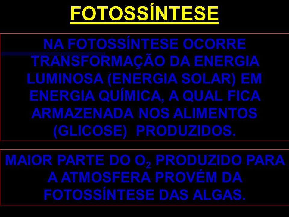 FOTOSSÍNTESE