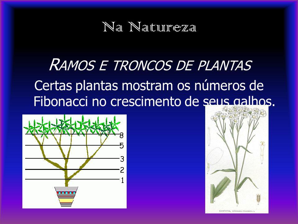 Ramos e troncos de plantas