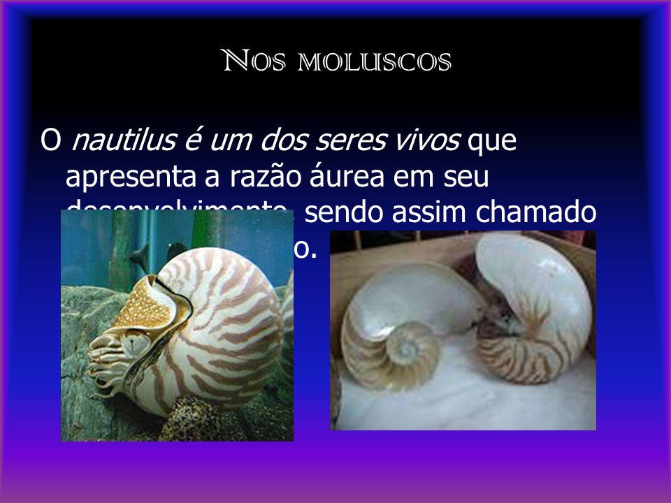 Nos moluscos O nautilus é um dos seres vivos que apresenta a razão áurea em seu desenvolvimento, sendo assim chamado de Espiral de Ouro.