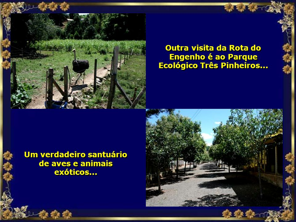 Um verdadeiro santuário de aves e animais exóticos...