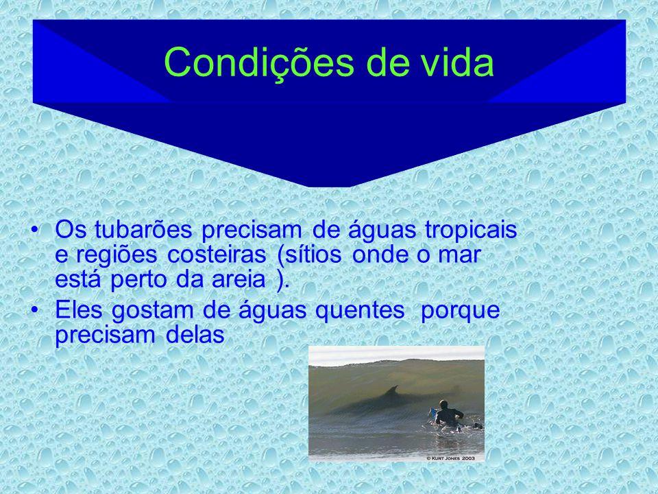 Condições de vida Os tubarões precisam de águas tropicais e regiões costeiras (sítios onde o mar está perto da areia ).