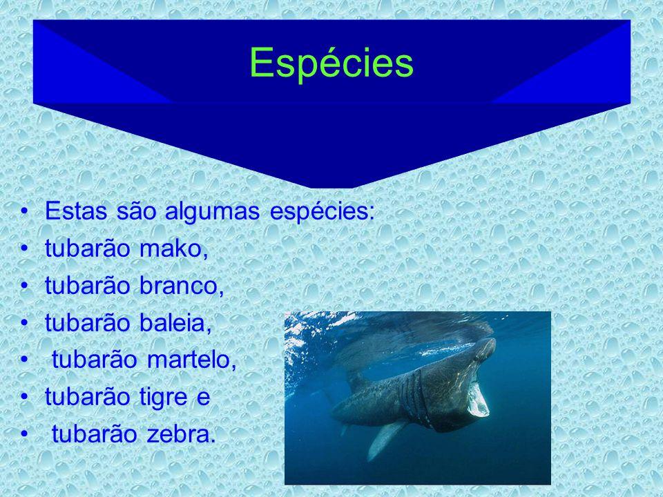 Espécies Estas são algumas espécies: tubarão mako, tubarão branco,