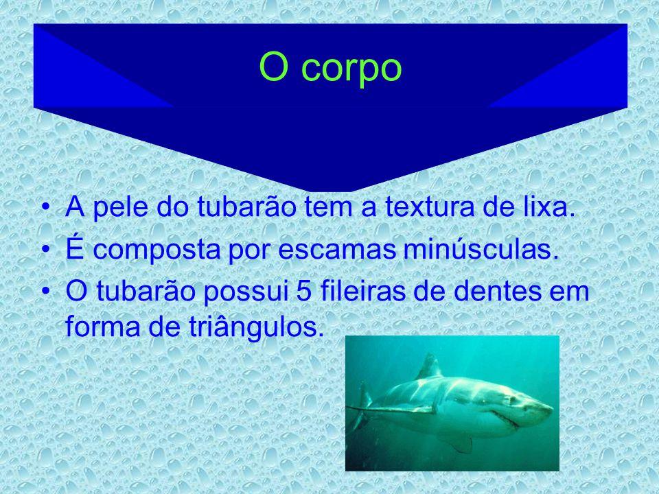 O corpo A pele do tubarão tem a textura de lixa.