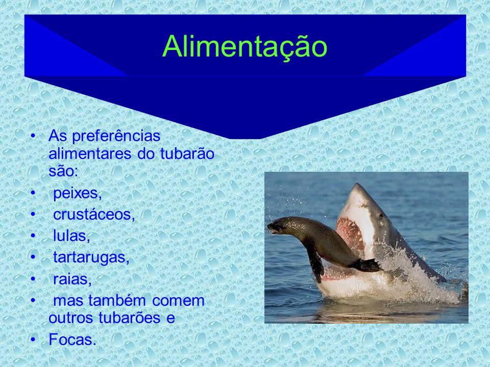 Alimentação As preferências alimentares do tubarão são: peixes,