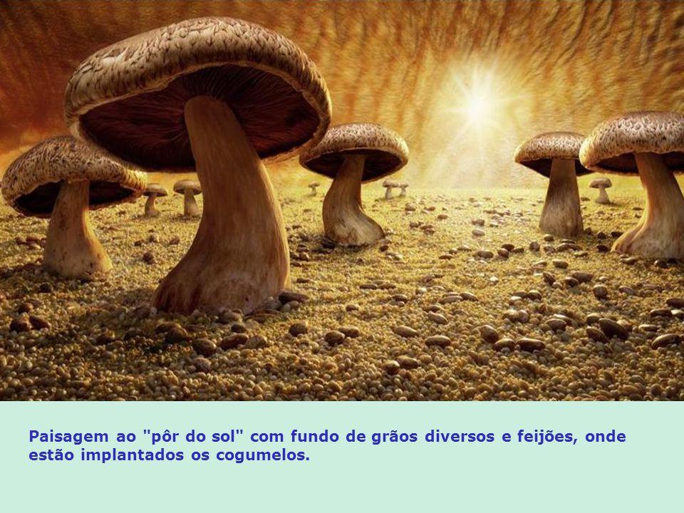 Paisagem ao pôr do sol com fundo de grãos diversos e feijões, onde estão implantados os cogumelos.