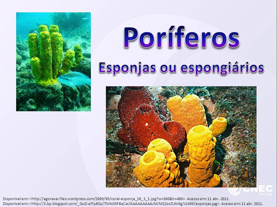Esponjas ou espongiários